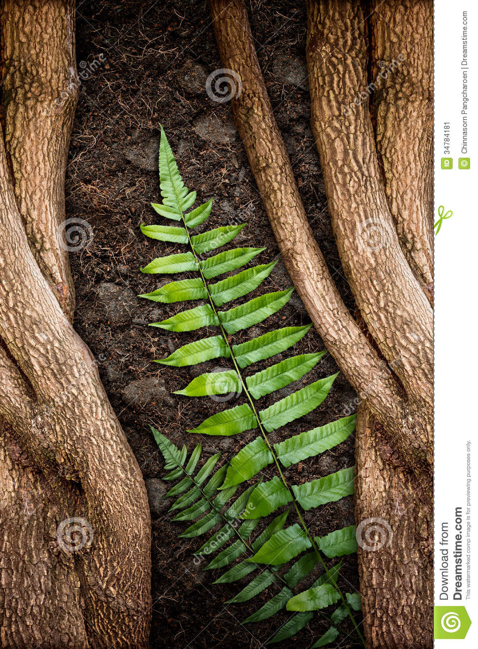 Tree with green fern and soil stock image image 34784181 for Soil and green