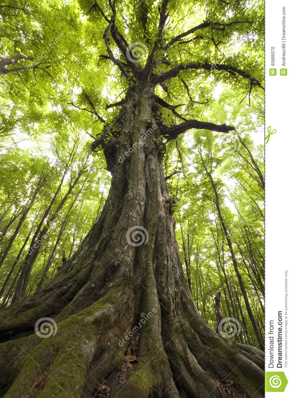 Tree In Green Jungle Stock Photo Image 40989370