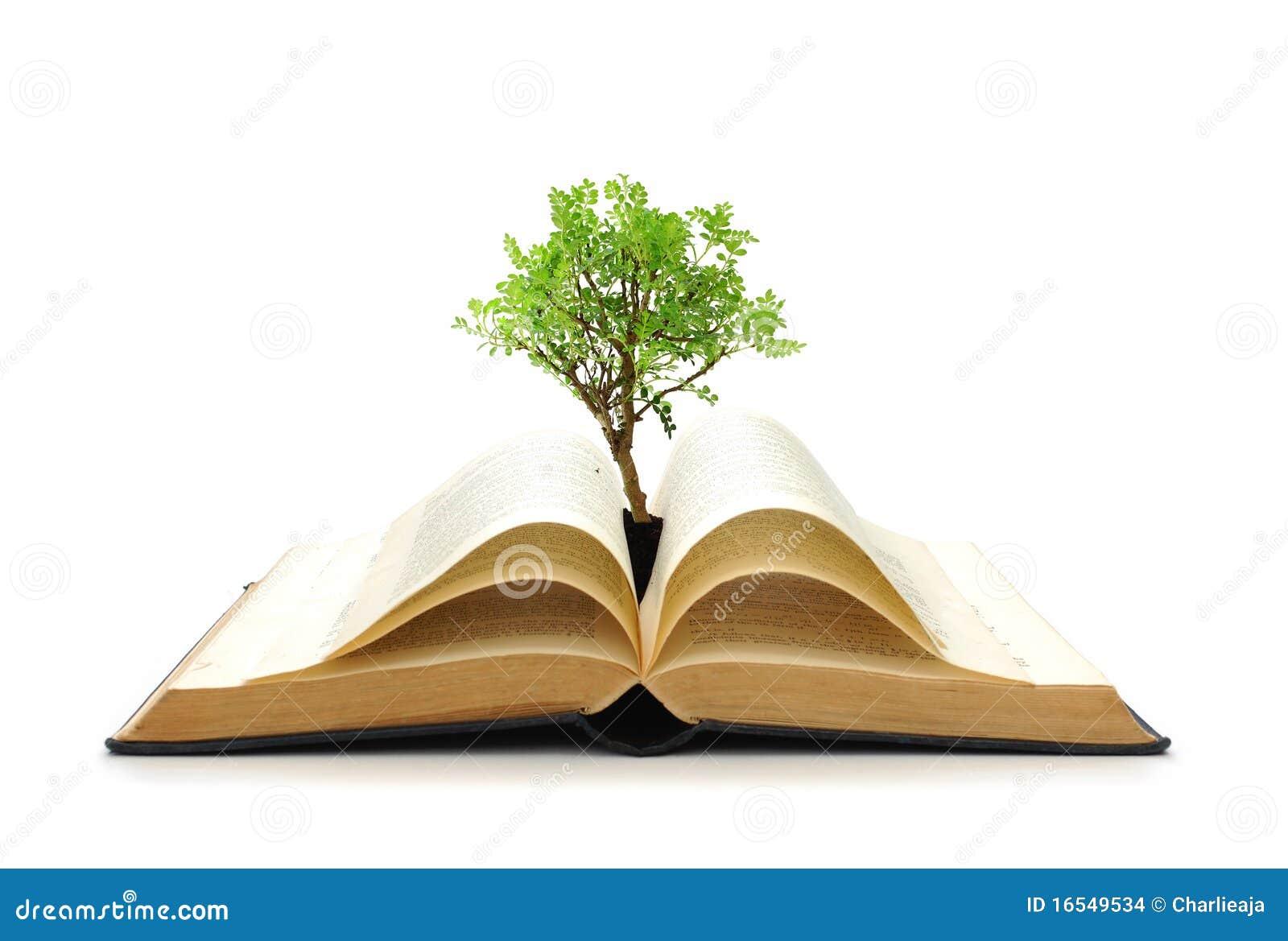 how to make trees grow shorter