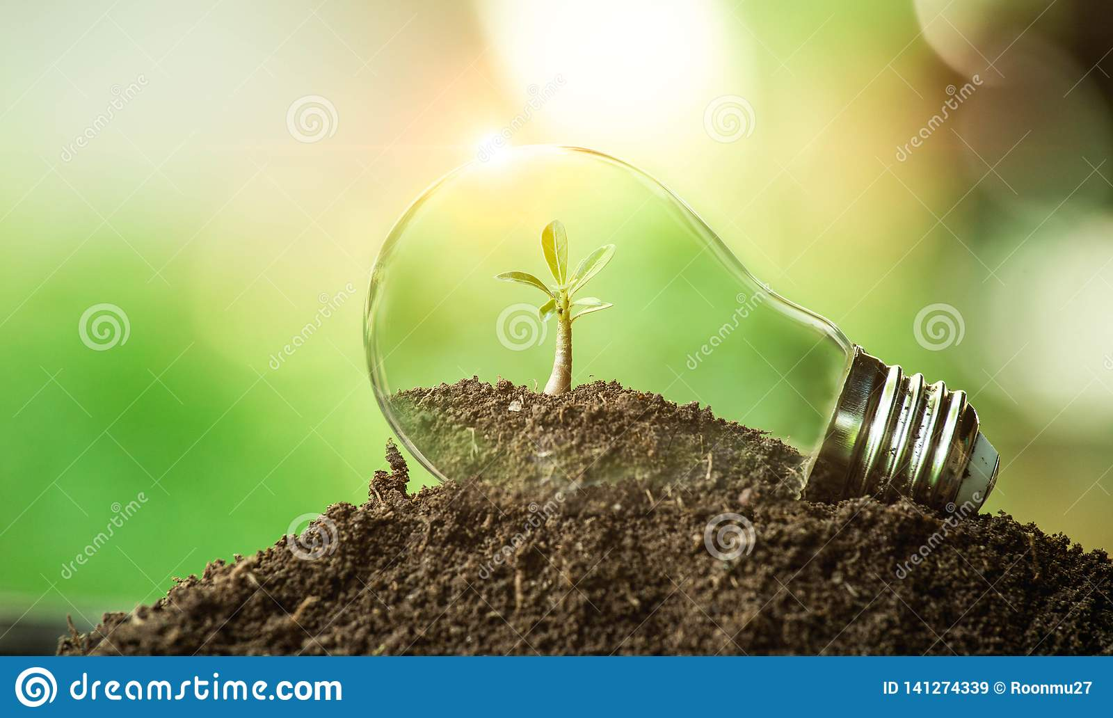 The tree growing on the soil in a light bulb.Creative idea of earth day or save energy and environment concept