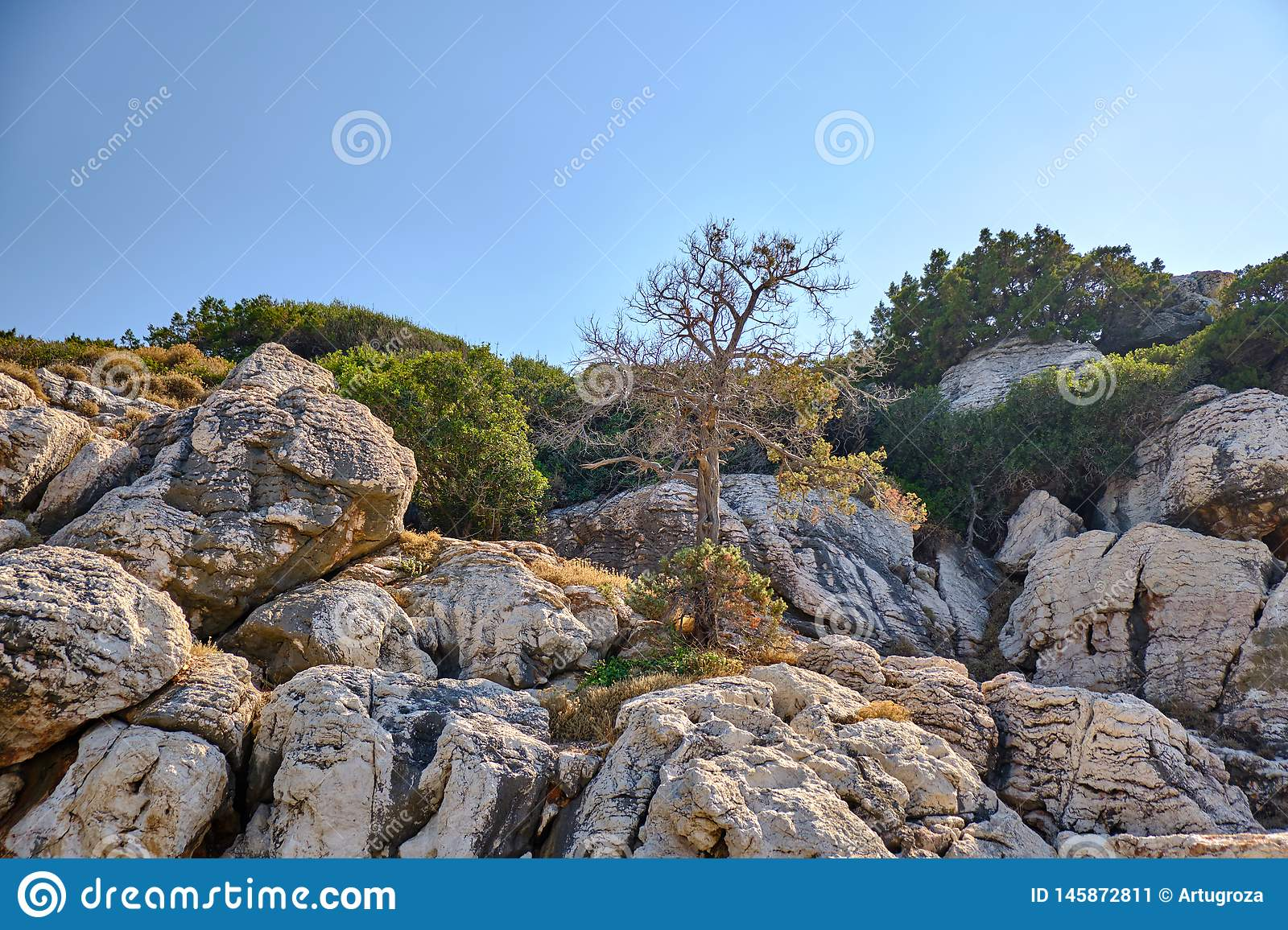 Tree growing among the stones on the mountain. 2019 stock image