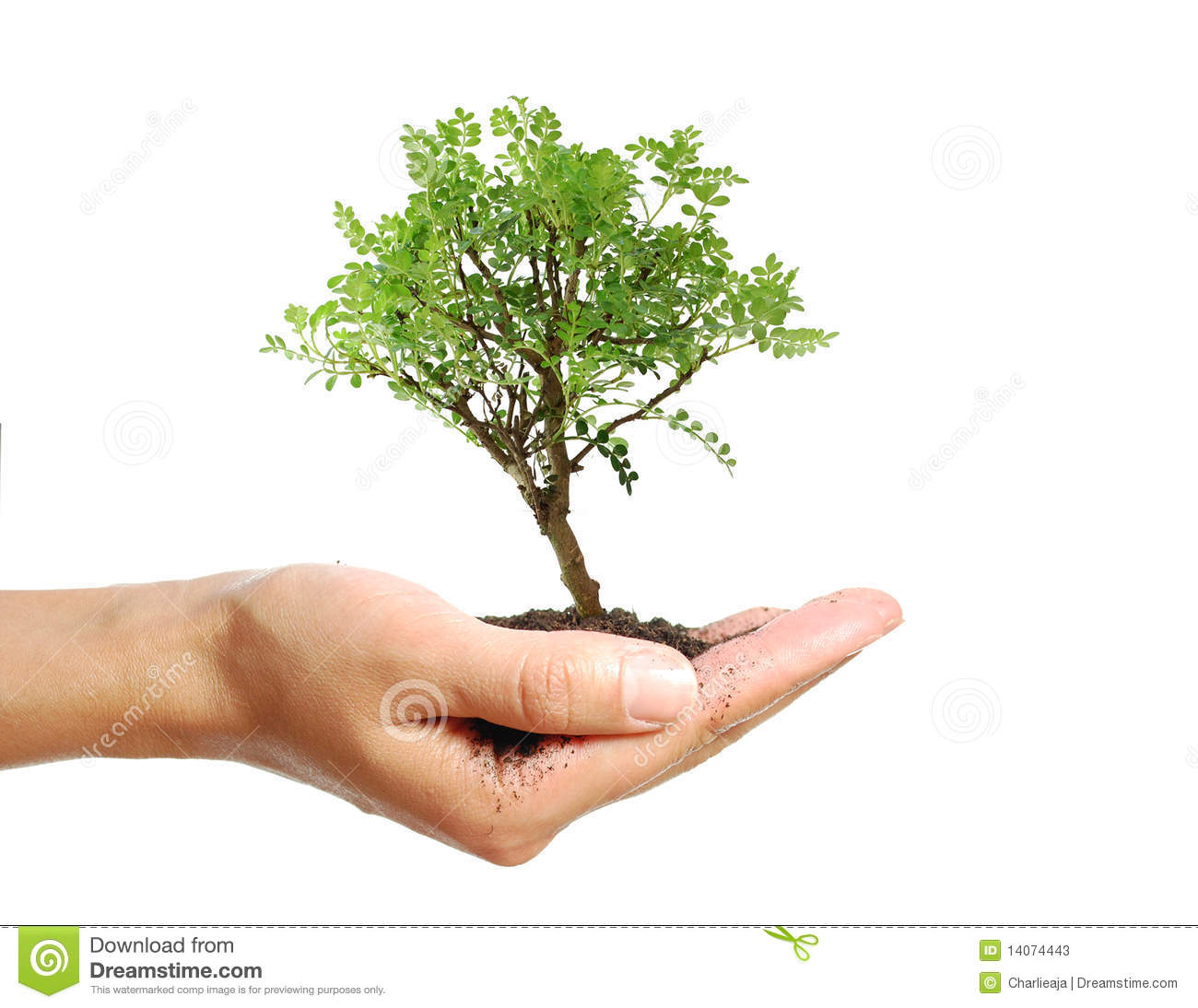 Tree in a hand stock image image of nature nurture 14074443 - Nurture images download ...