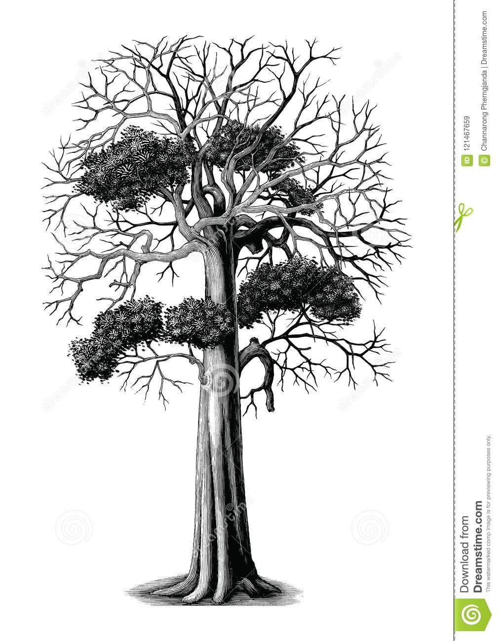 Tree Hand Drawing Vintage Engraving Clip Art Isolated On ...