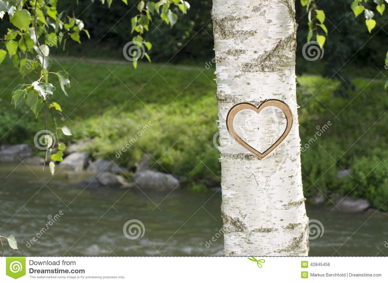 tree with heart carved in on river side stock photo