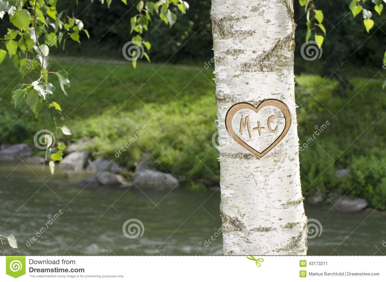 Stock Photo Tree Heart Letters M C Carved Lovers Birch Along Image43173211 on Writing A Business Letter