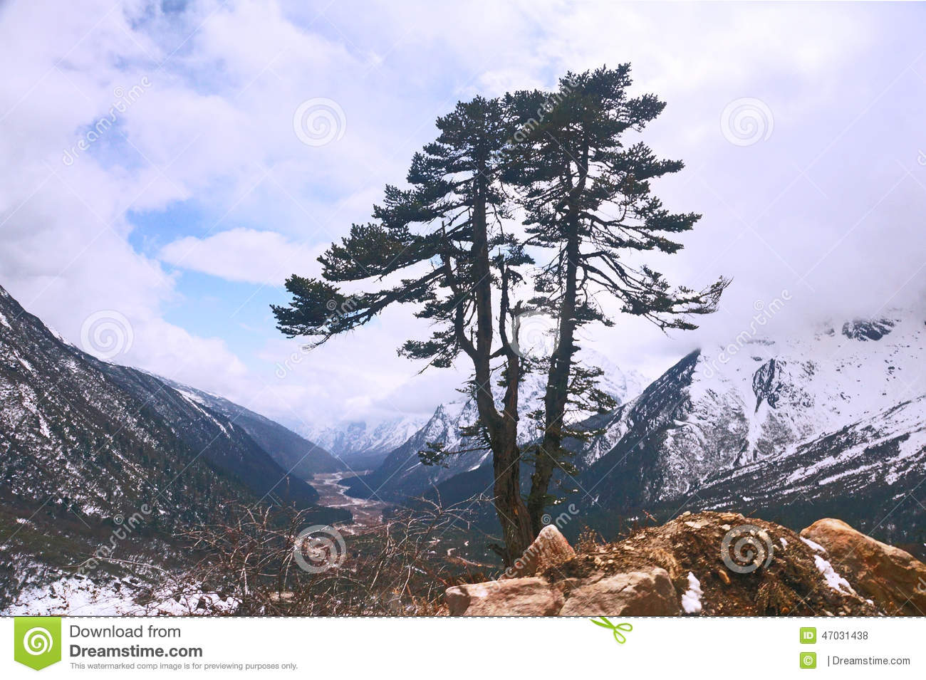 tree in the himalayas stock photo image 47031438 hiker clipart black and white hiker clipart png