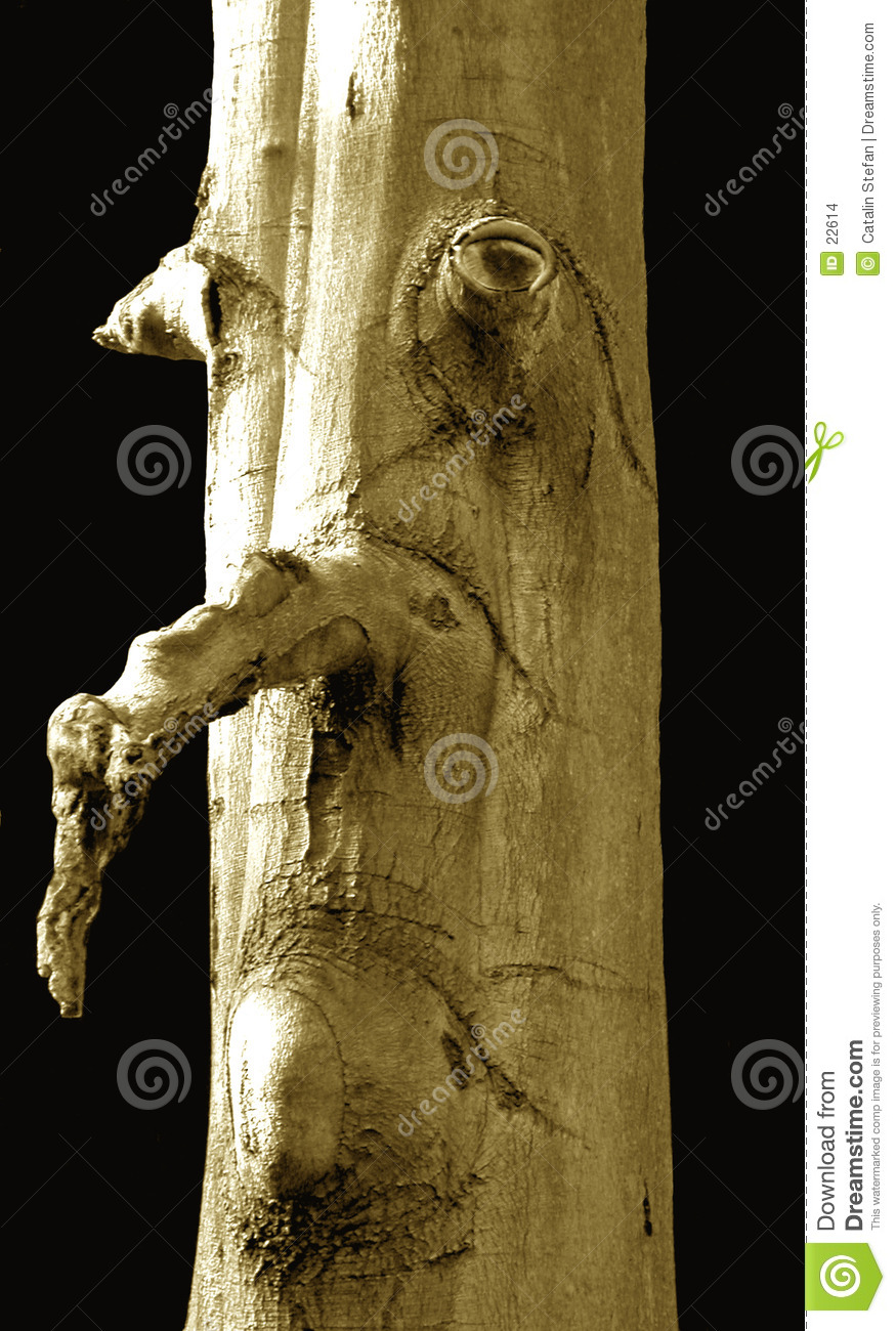 Tree with human face