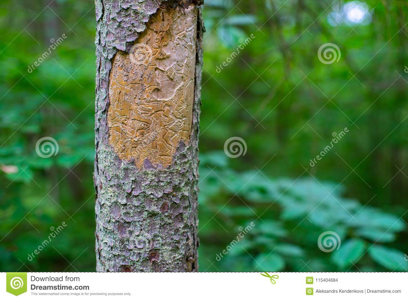 A Tree Infected With A Beetle. Green Color. Stock Photo - Image of ...