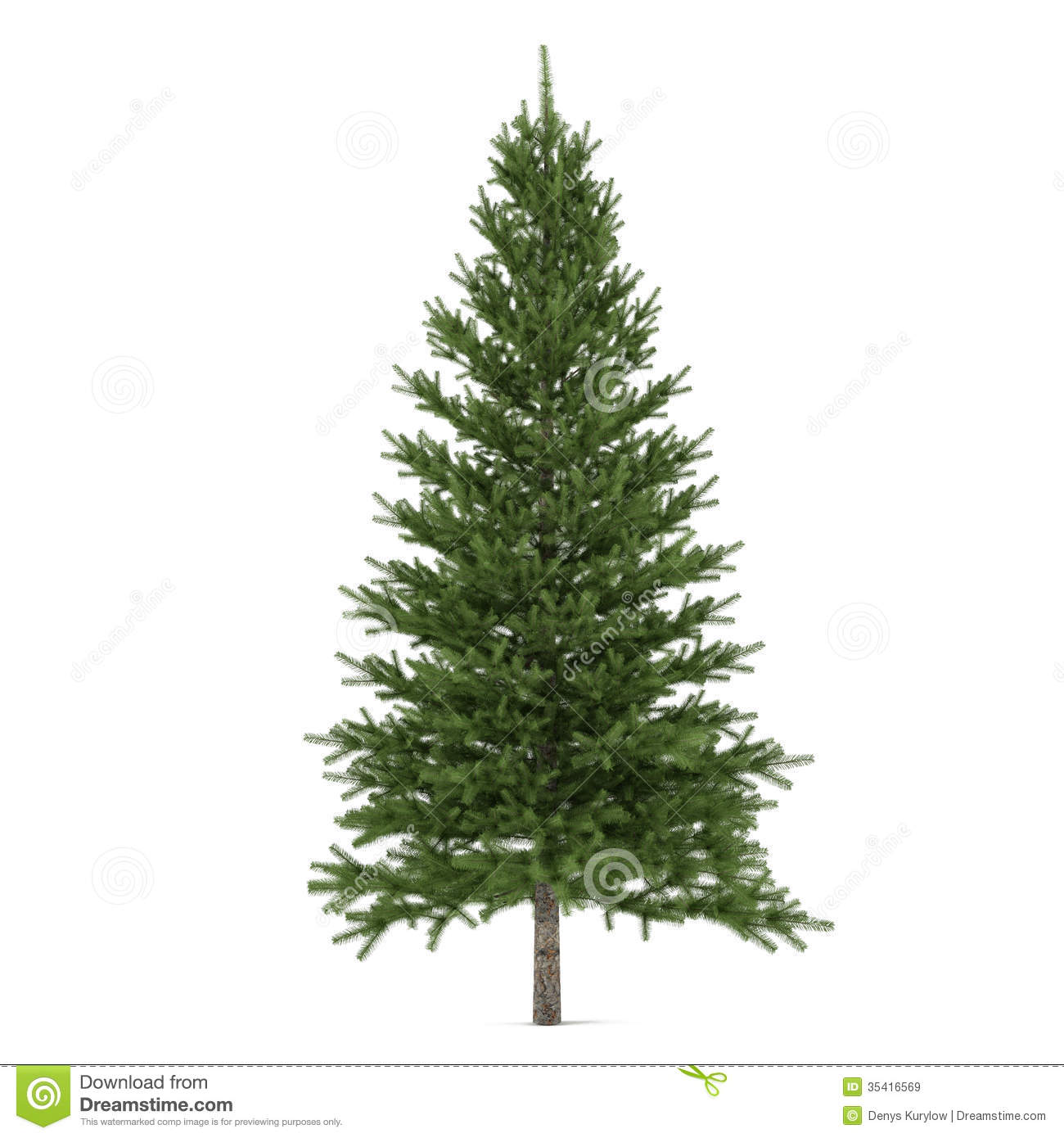 Tree Isolated. Pinus Fir-tree Royalty Free Stock Images - Image ...