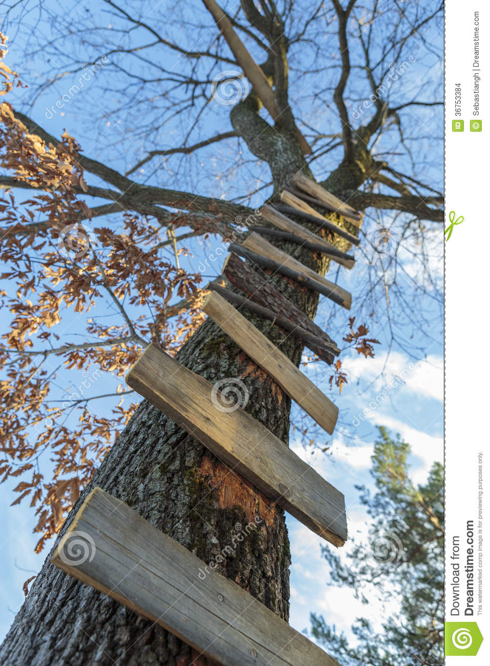 Tree Ladder Stock Photo Image Of Path Climb Adventure