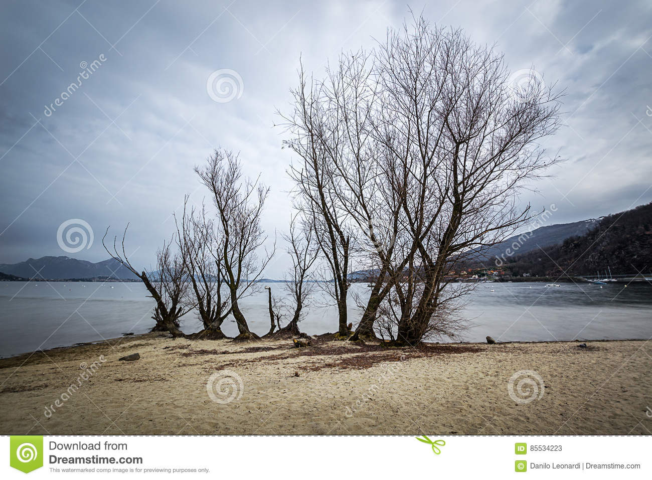 Tree by the lake