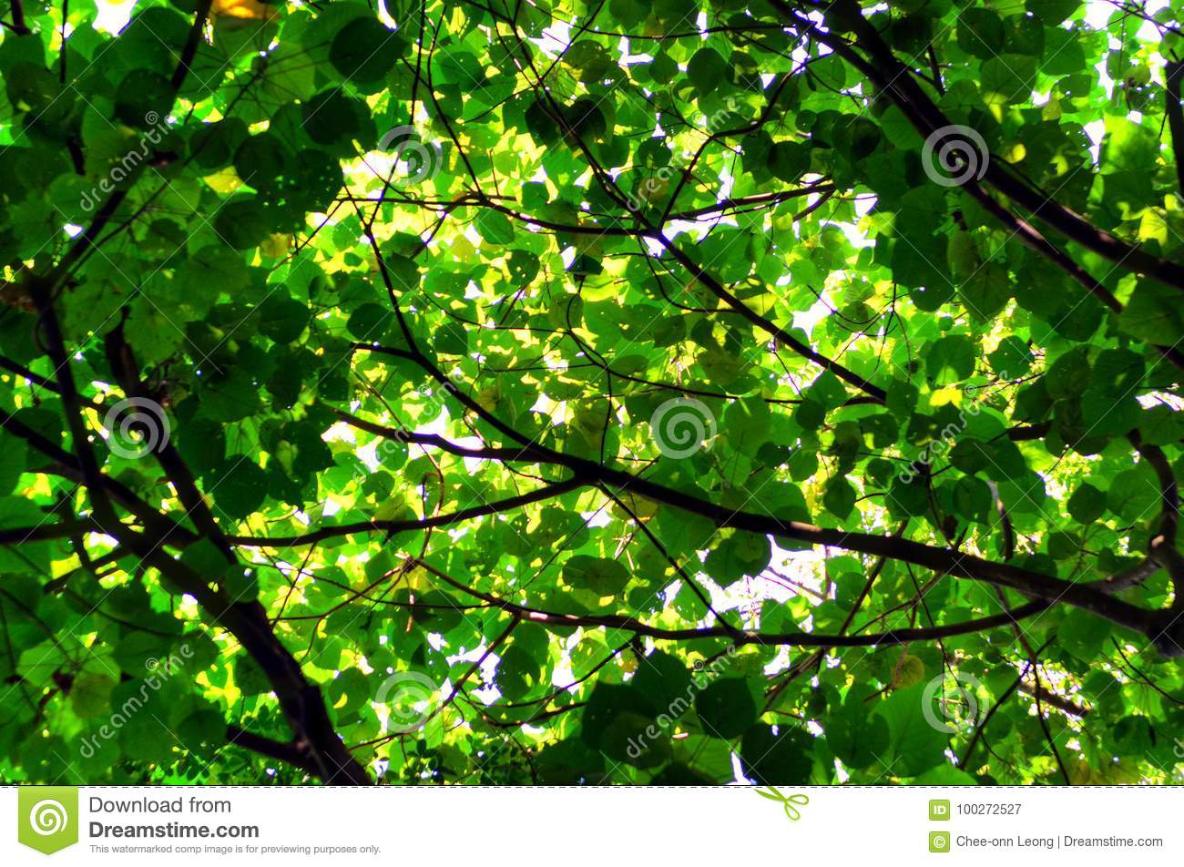 Tree leaf and sun light abstract background