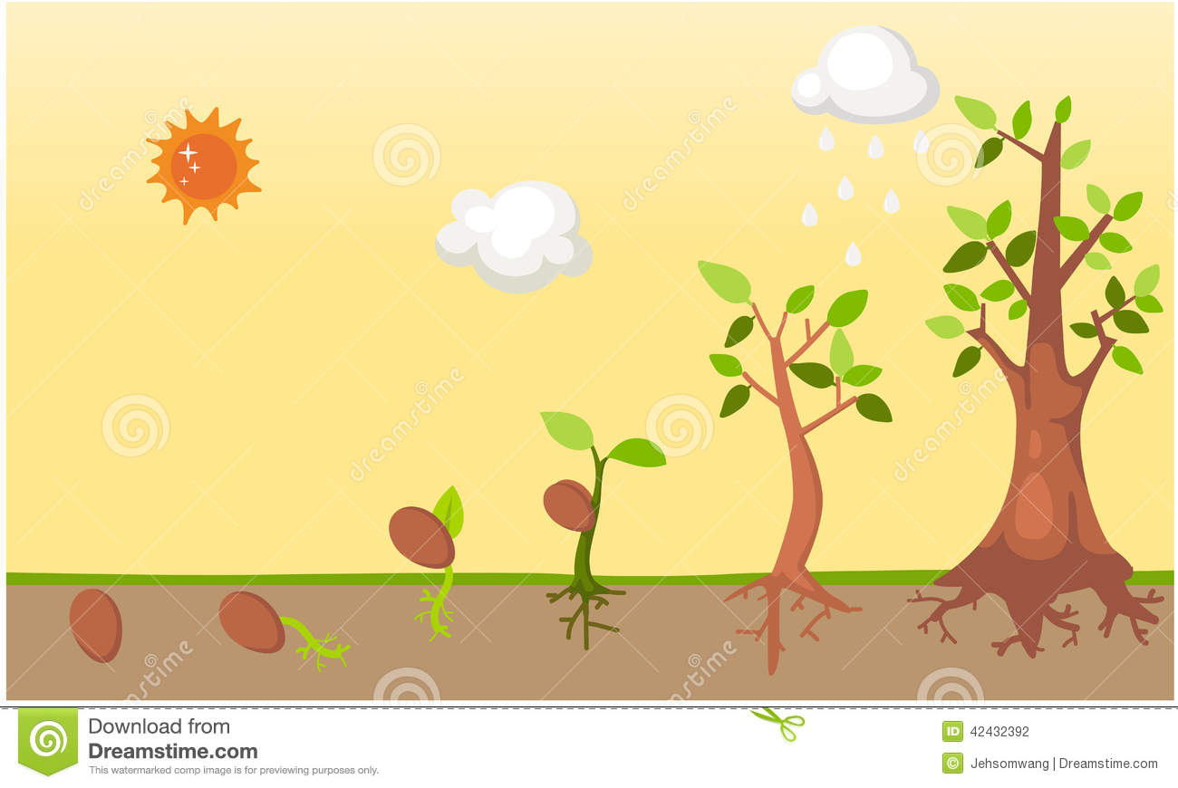Stock Illustration Tree Life Cycle Vector Illustration Image42432392 on Plant Life Cycle Kids