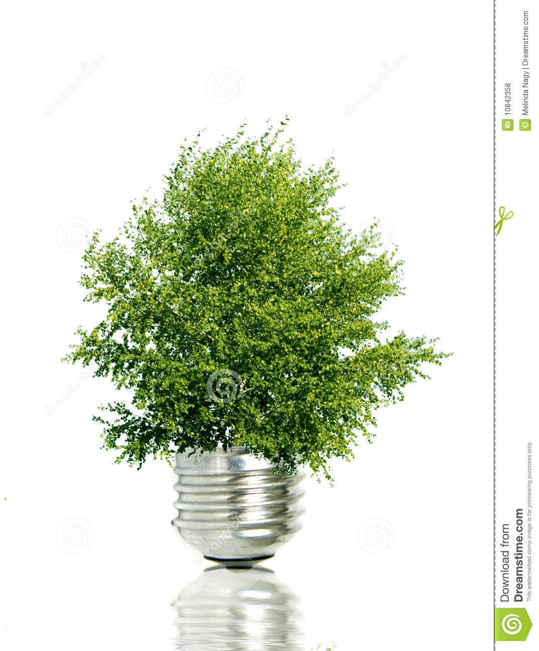 photosynthesis and green light bulb Photosynthesis chloroplast structure:  most people are familiar with the incandescent light produced by ordinary light bulbs in our homes  , yellow-green and .