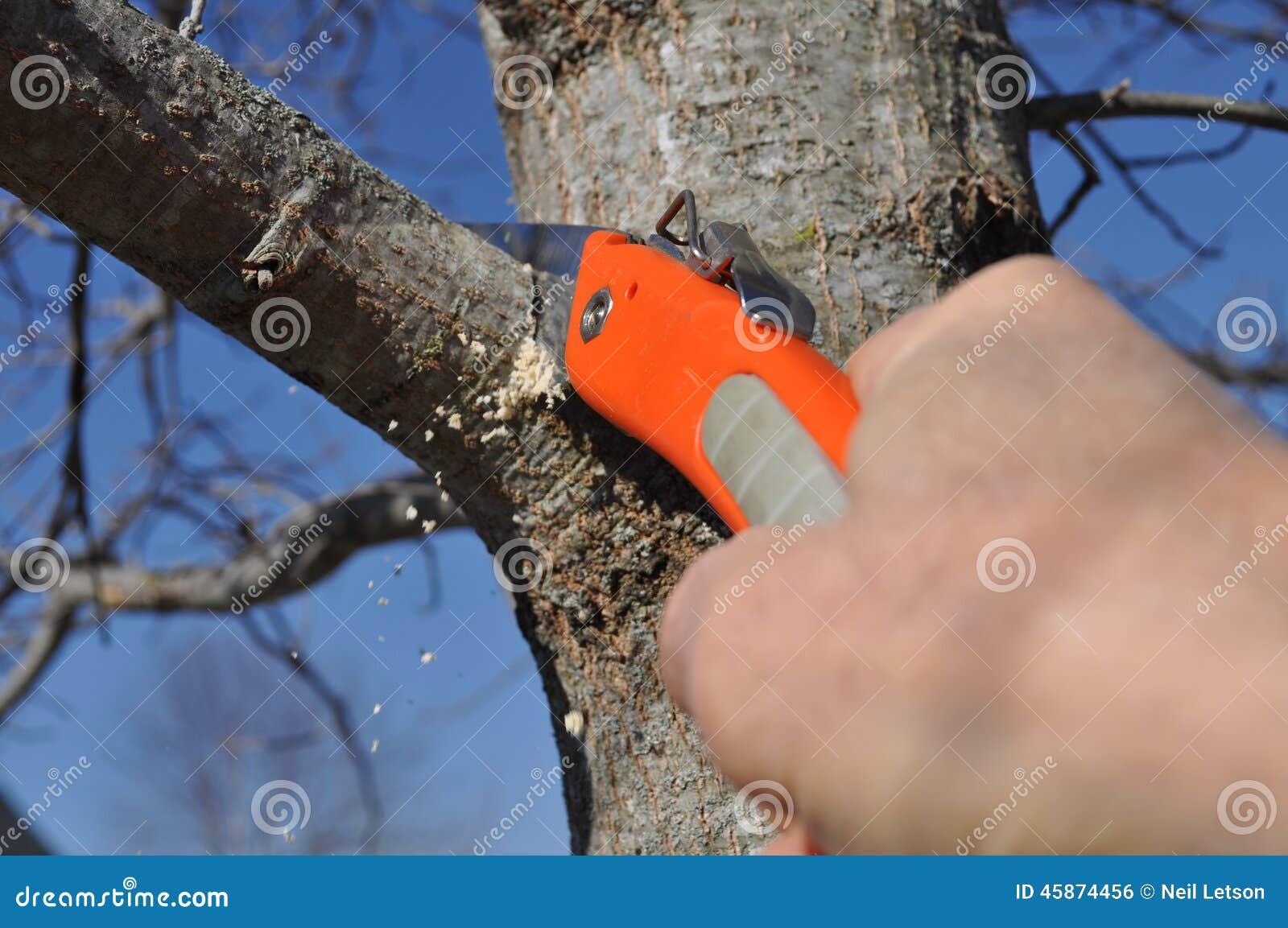 Tree Limb Being Properly Pruned