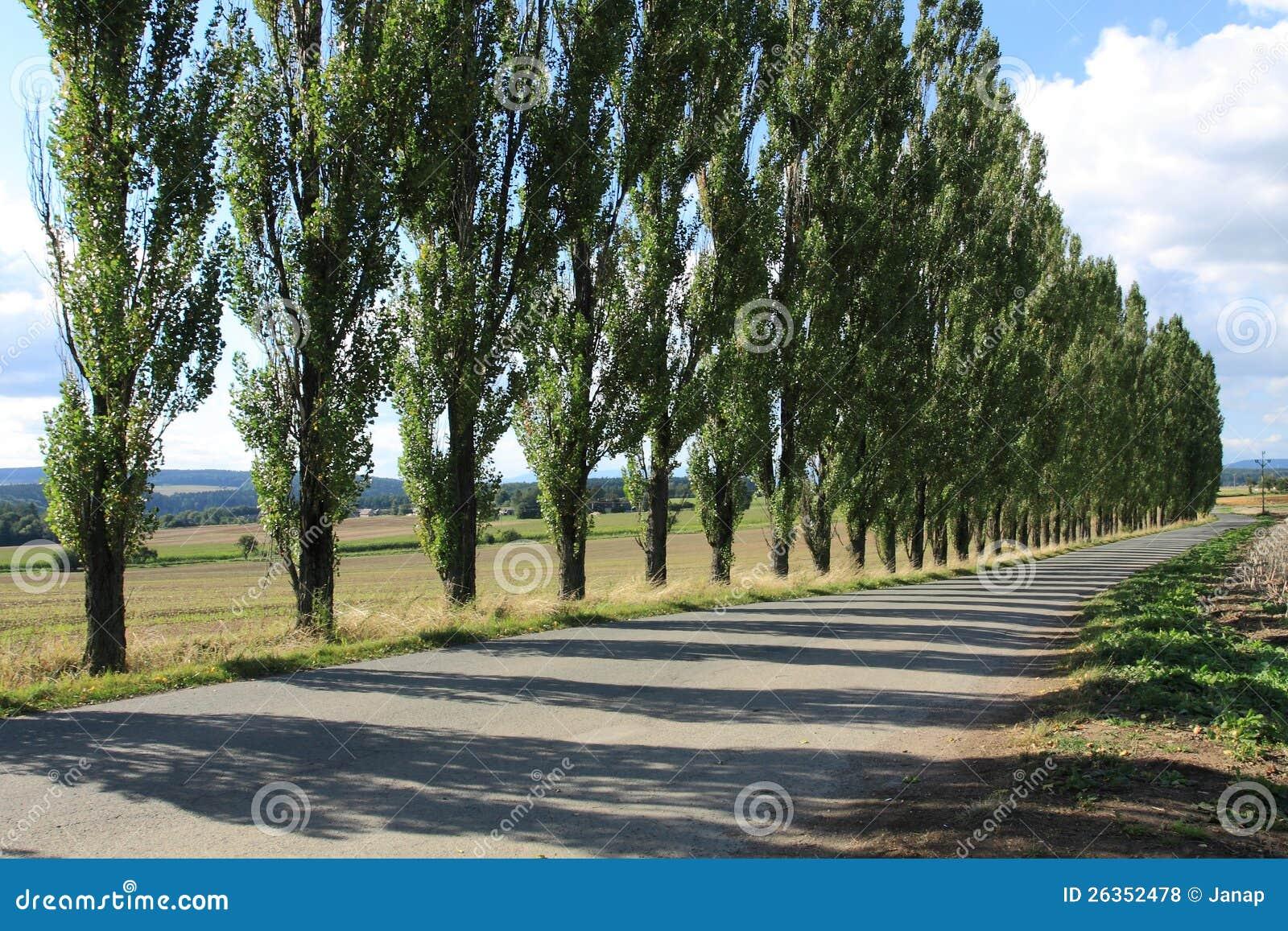 M Shadows 2012 Tree Line Of Poplar Tr...