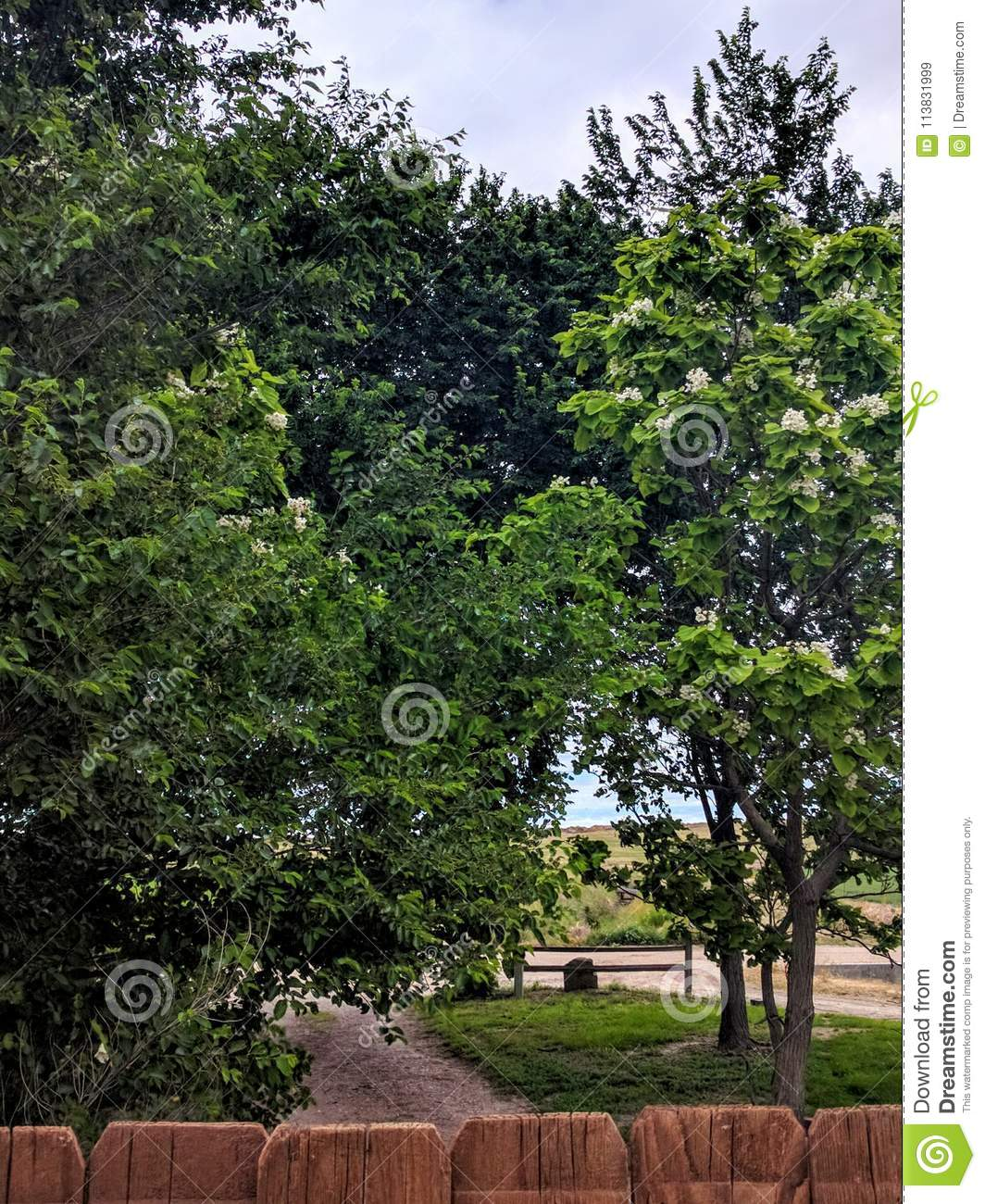 tree lined drive stock image image of drive tree lined 113831999
