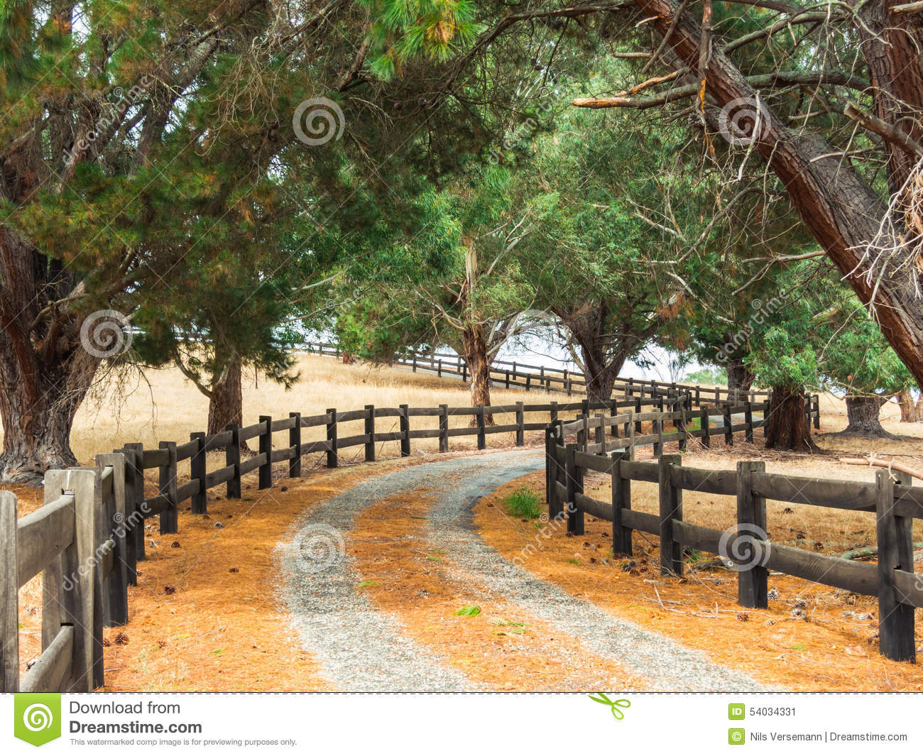 Tree Lined Fenced Driveway Leading To A Country Estate