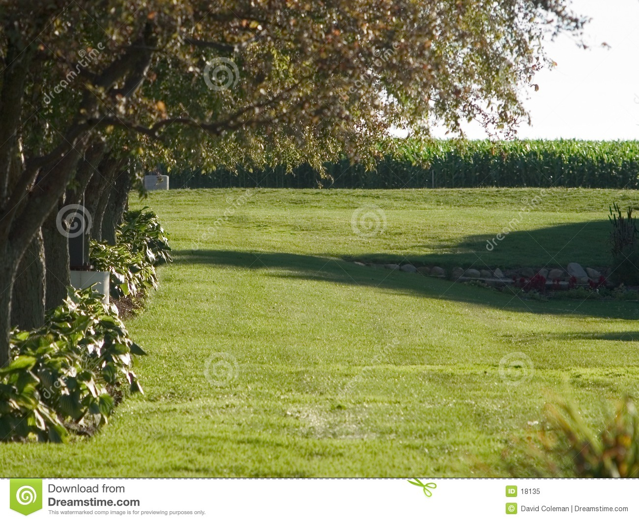 Tree lined lawn