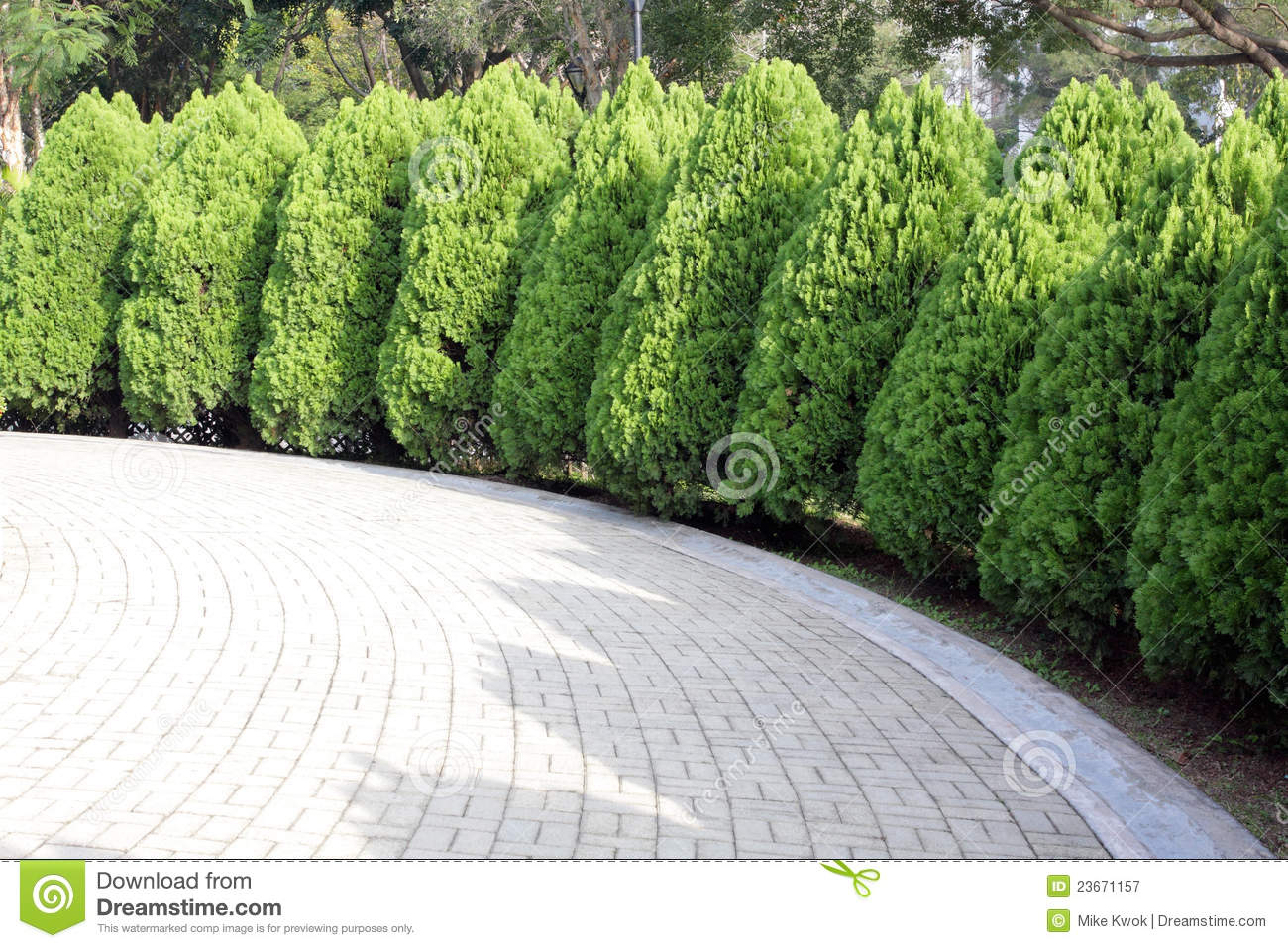 Tree Lined Road Royalty Free Stock Photography - Image: 23671157