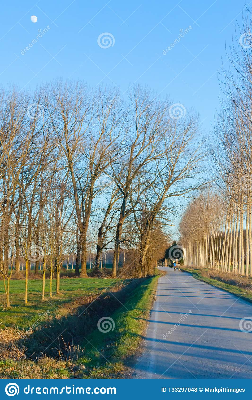 Tree lined road in the countryside sunset with the moon
