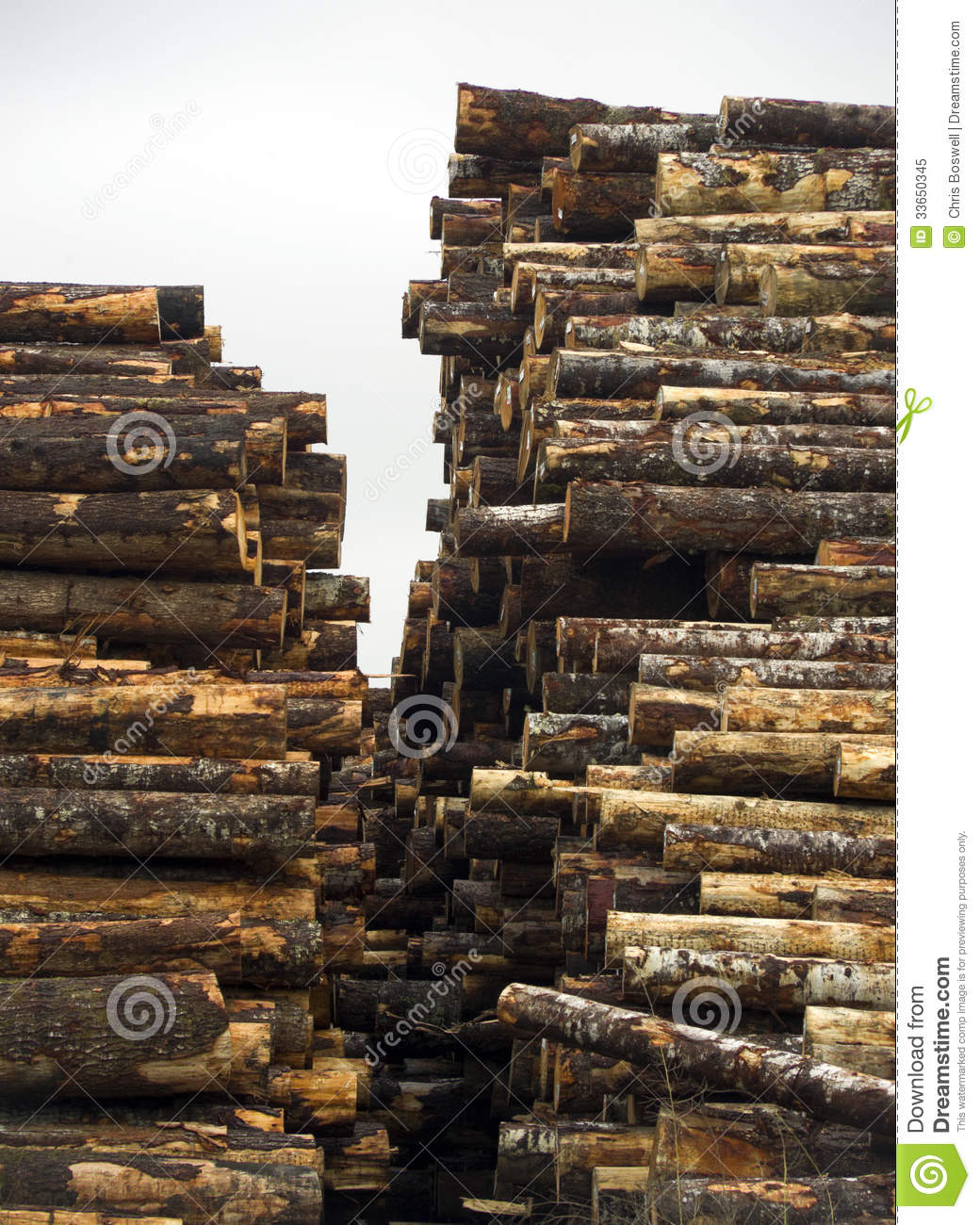 http://thumbs.dreamstime.com/z/tree-log-sections-laying-stacked-lumber-yard-sawmill-wood-storag-wait-processing-33650345.jpg