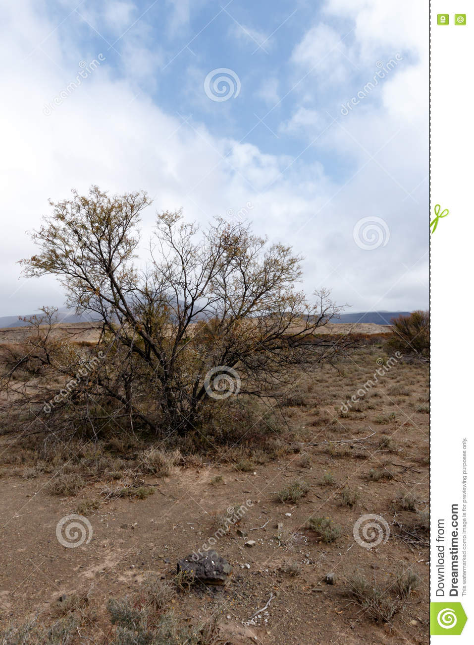 Tree In The Middle Of Nowhere - Fraserburg Landscape