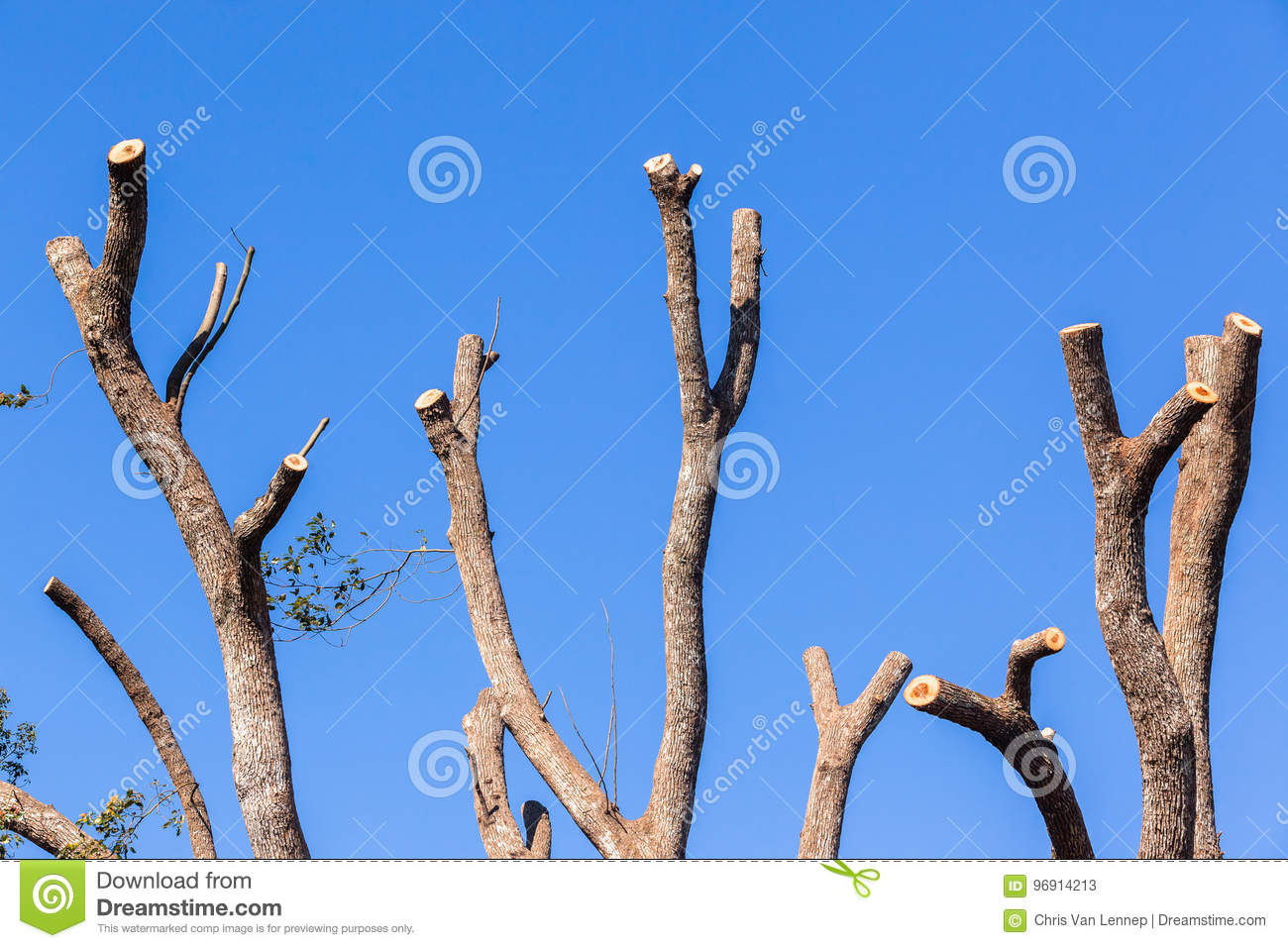 Tree Bare Branches Blue