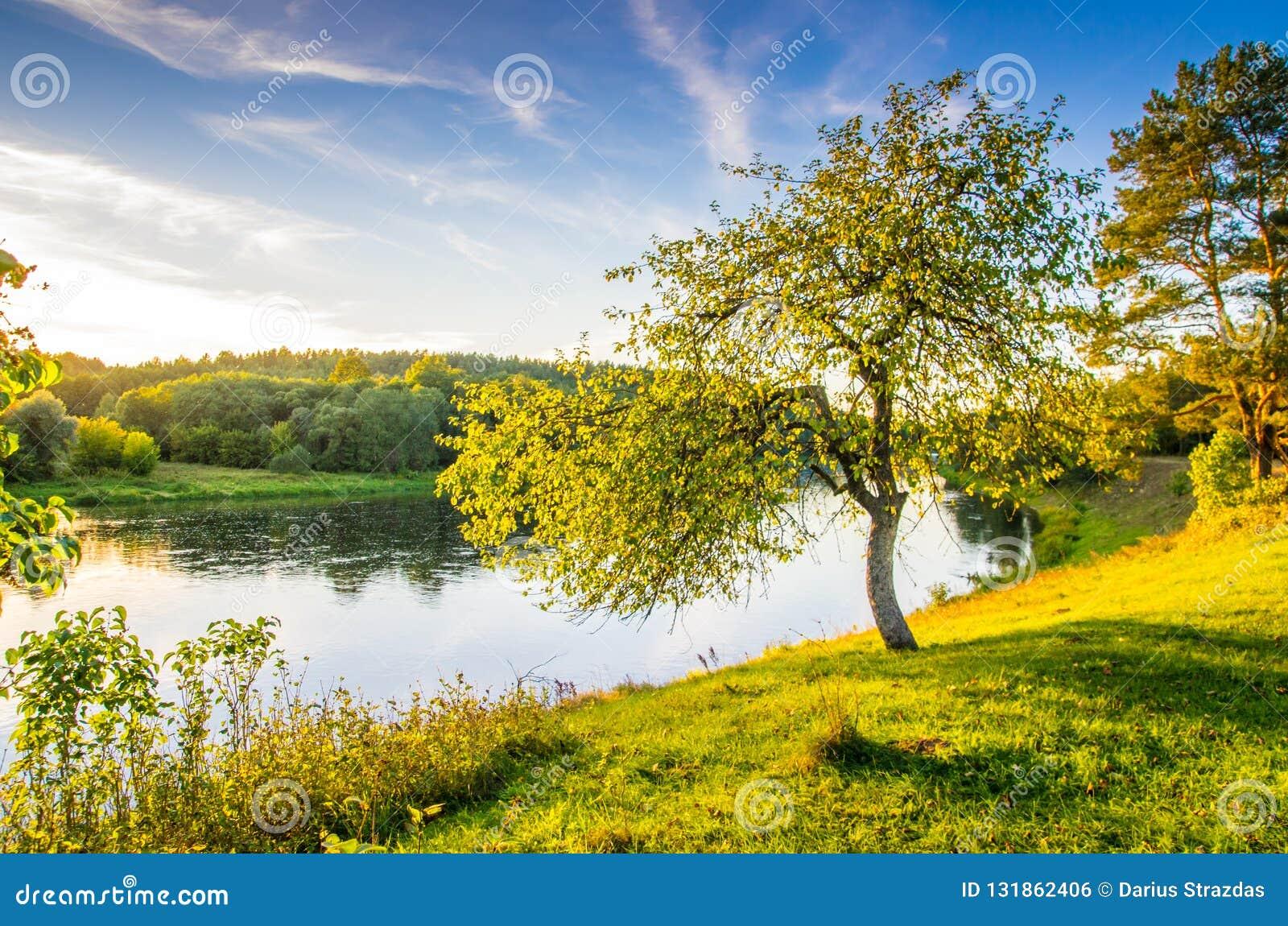 Tree near river, scenic nature landscape