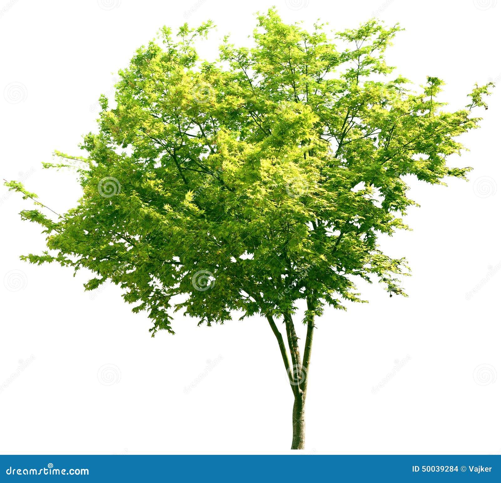 Tree oak plants nature green summer leafy greenery stock photo image 50039284 - Leafy houseplants ...