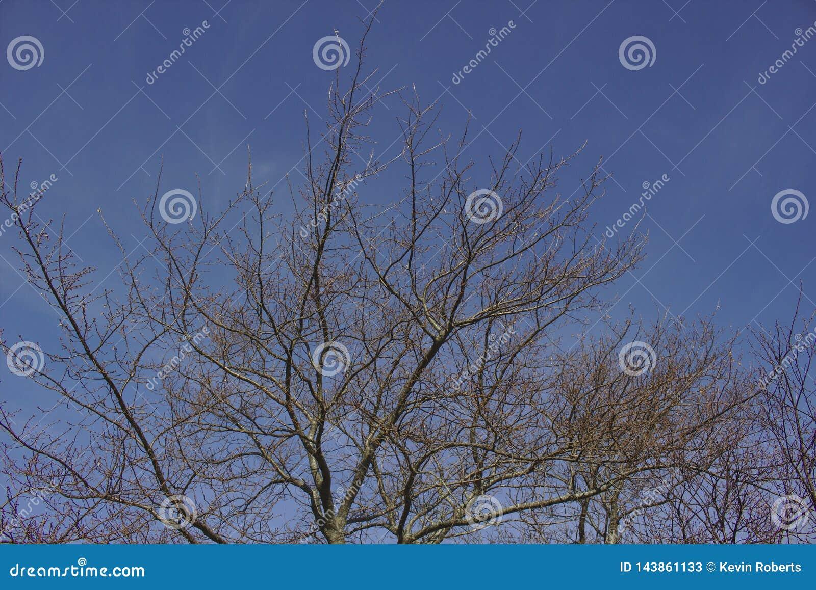 Tree- och blåttsky
