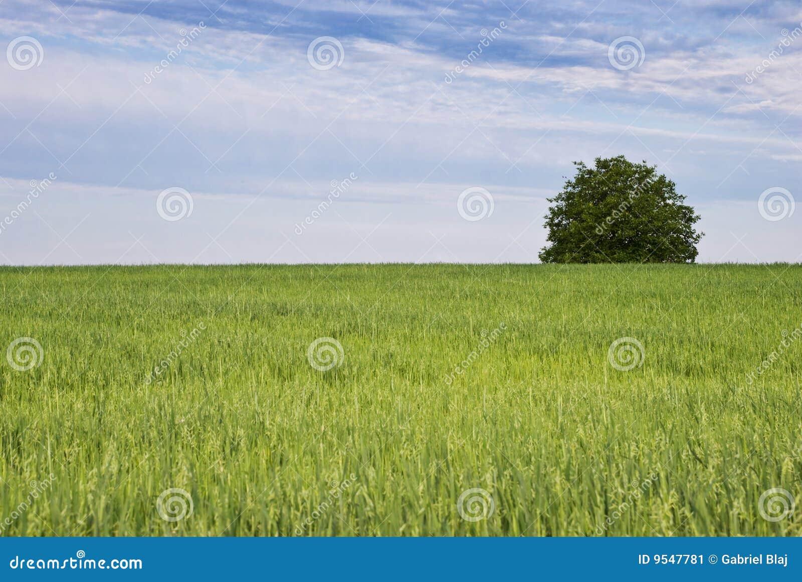 Tree och grönt fält av oats
