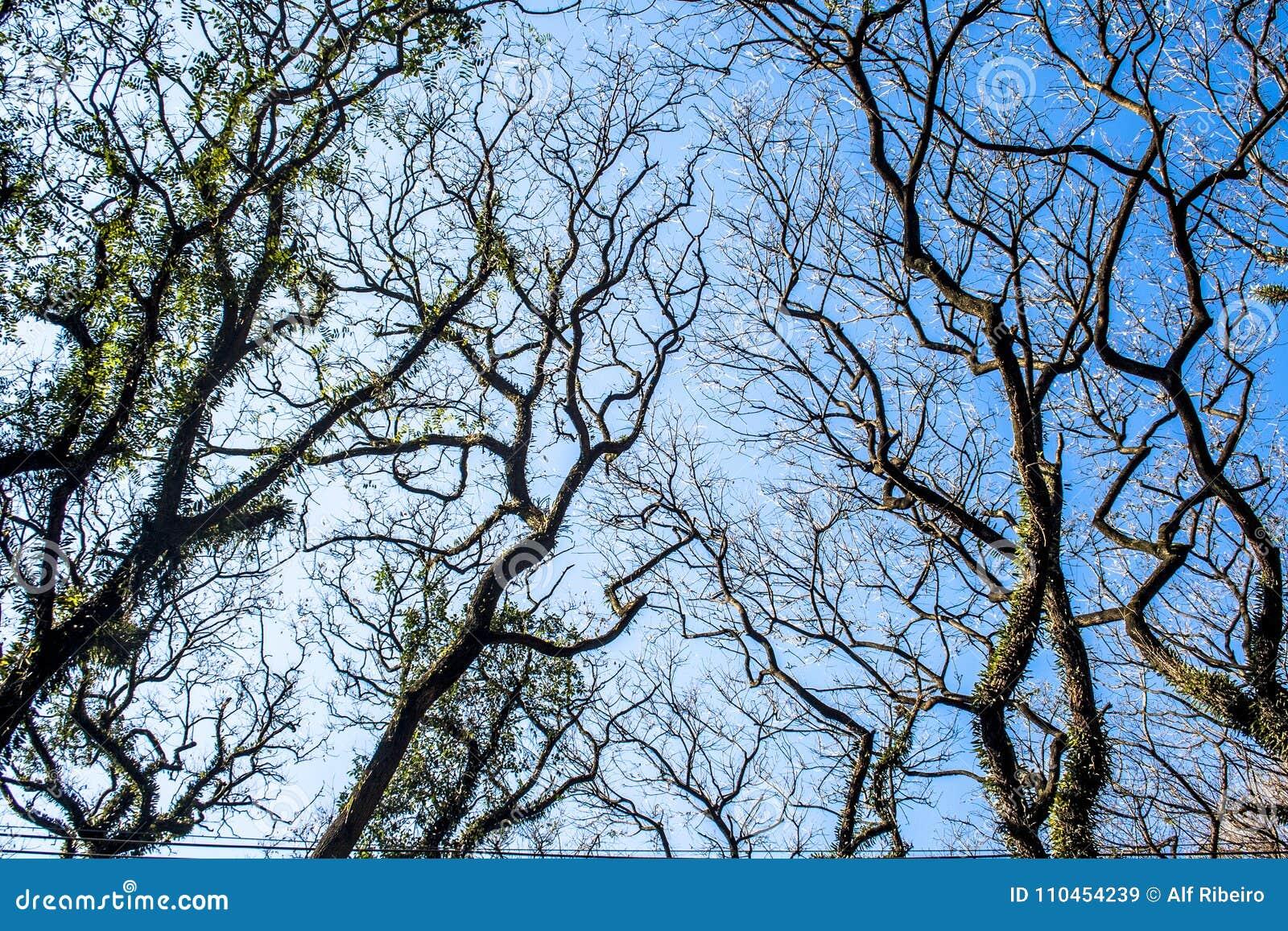Tree och sky