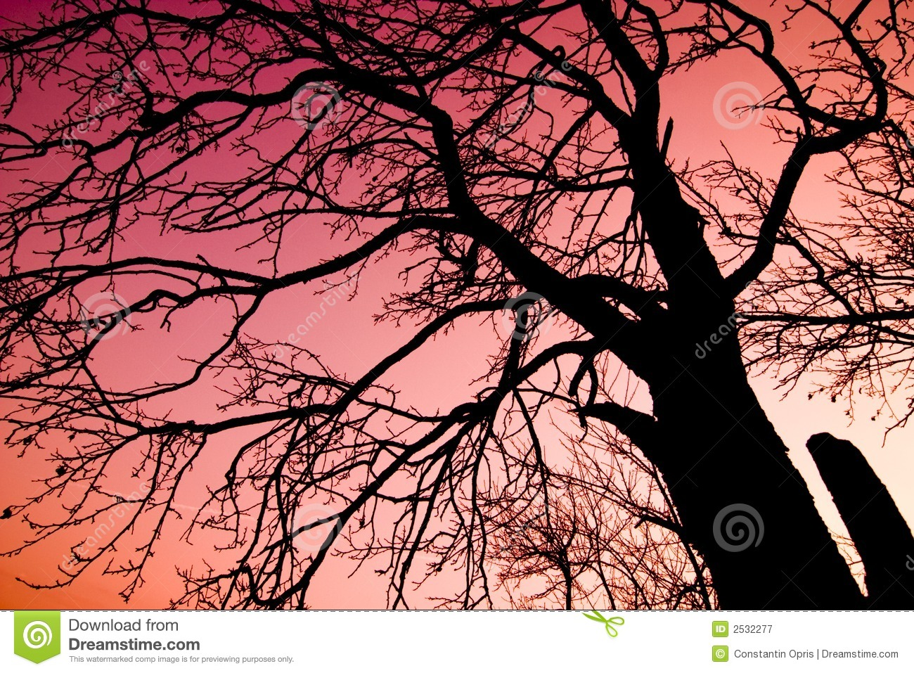 Tree over red sky