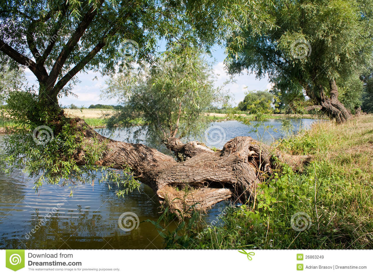 Tree over water