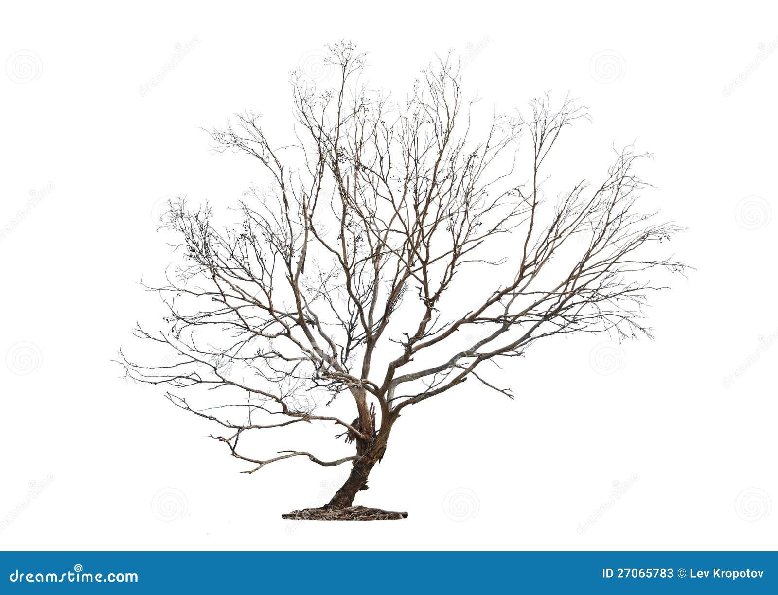 Tree på vit bakgrund