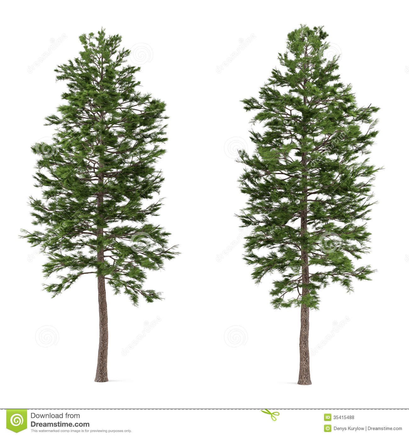 Tree Pine Isolated. Pinus Sylvestris Royalty Free Stock Photos - Image ...