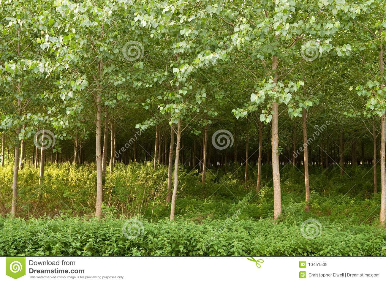 Tree Plantation Royalty Free Stock Images - Image: 10451539