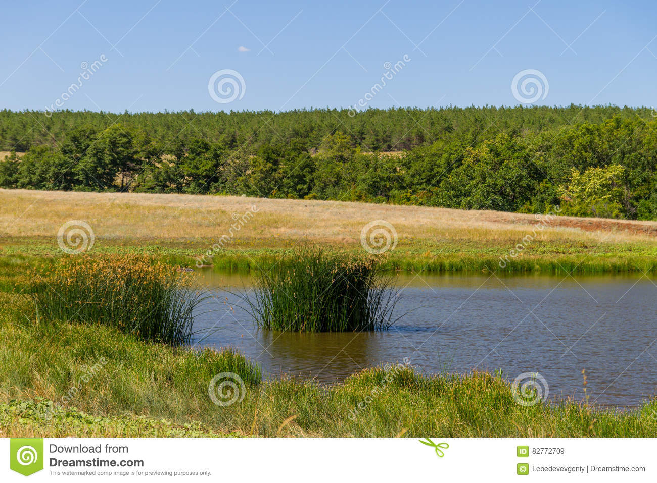 Tree and pond royalty free stock photography for Pond dealers