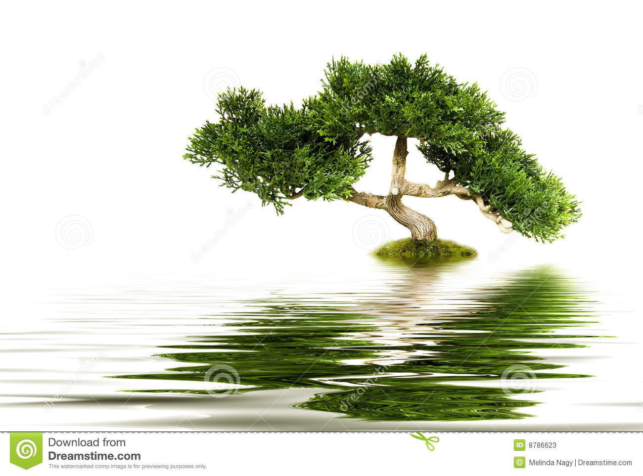 Tree Reflecting In Water Stock Photos Image 8786623