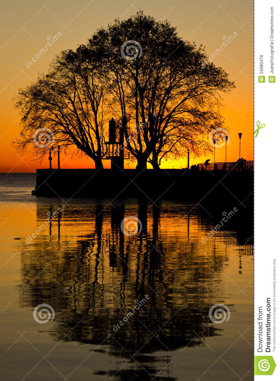 Tree reflections sunrise