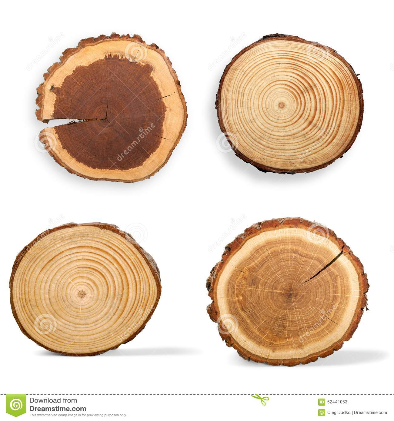 Tree ring royalty free stock photography cartoondealer Pine tree timber