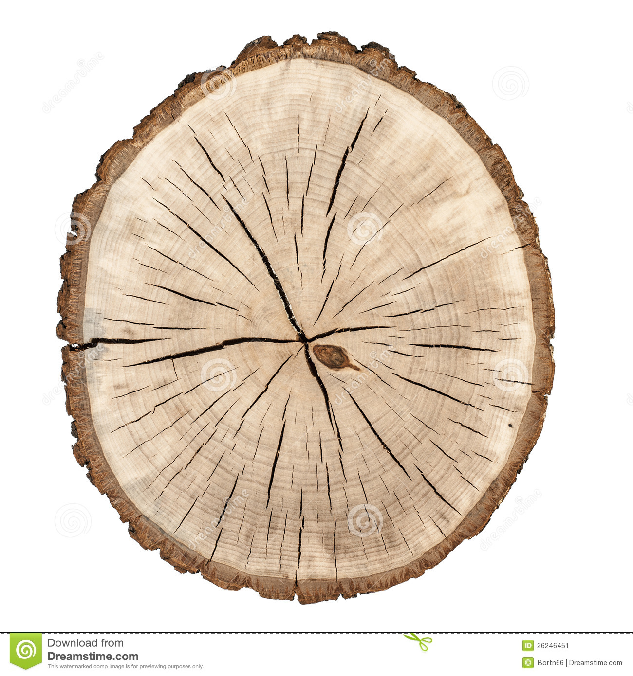 tree rings stock image image of circle  tree  grain tree stump clipart images tree stump clip art pic