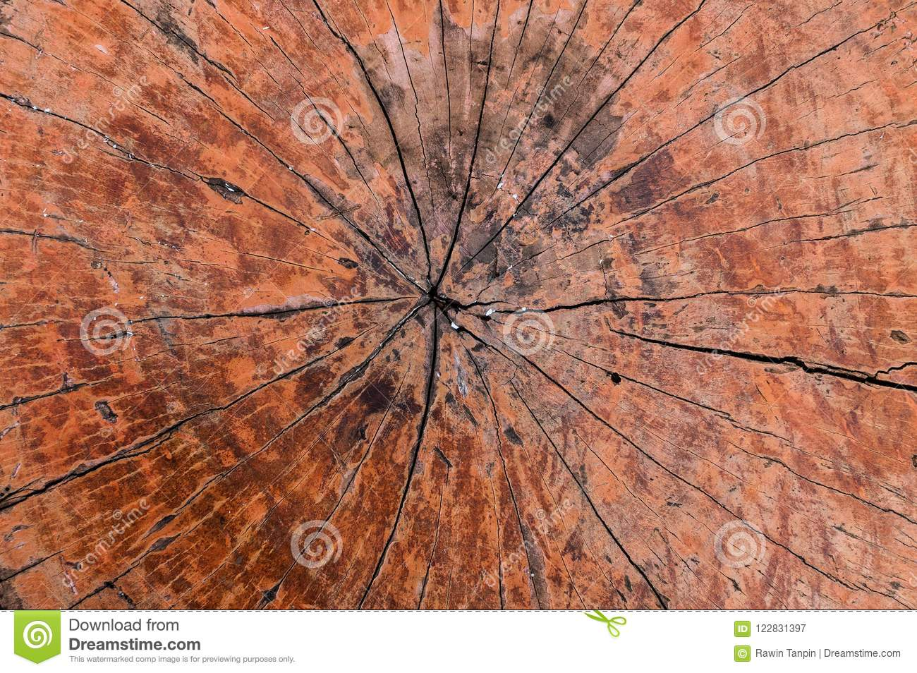 Tree rings old wood texture background,Cross section annual ring