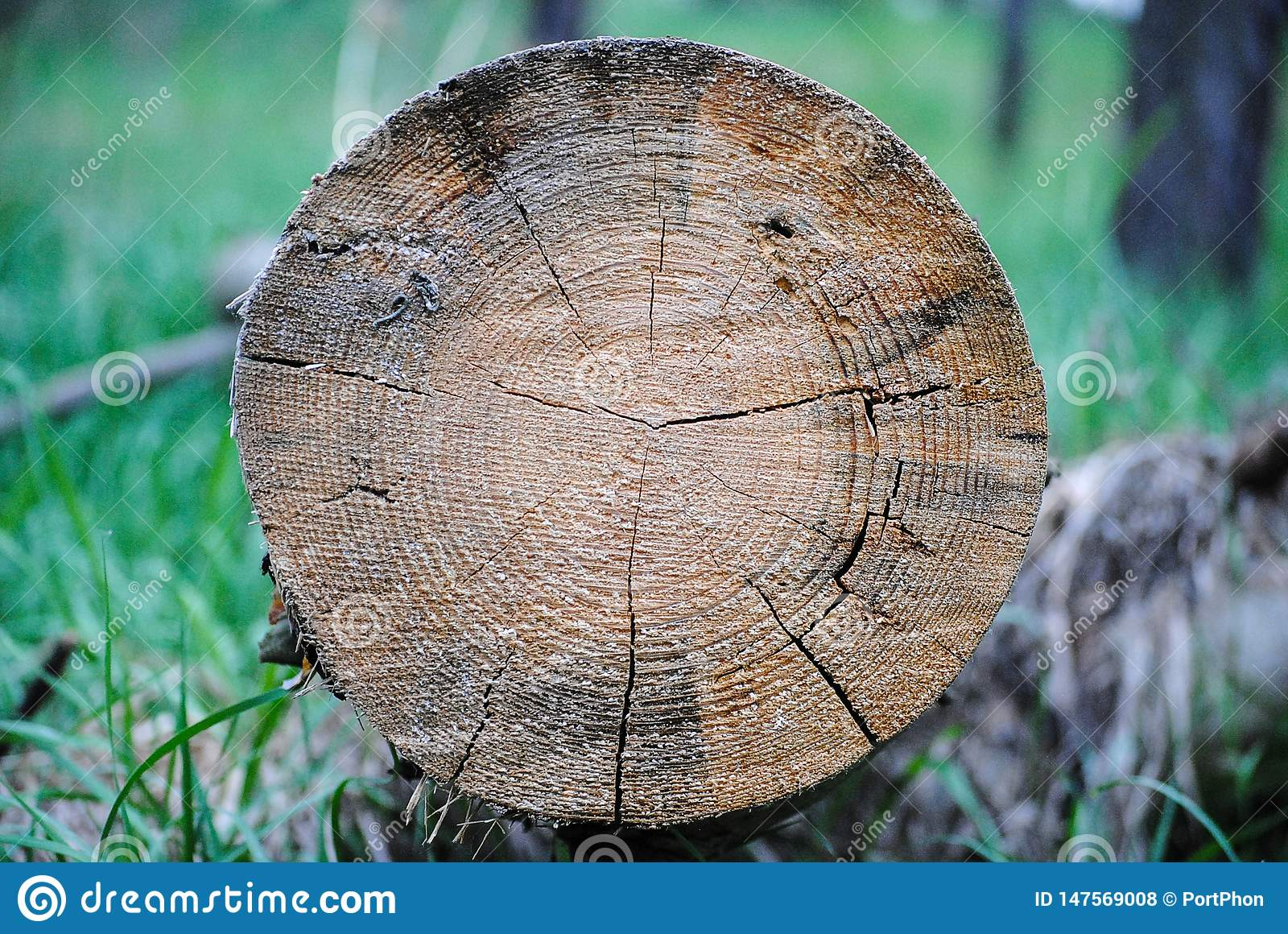 Tree rings tree structure