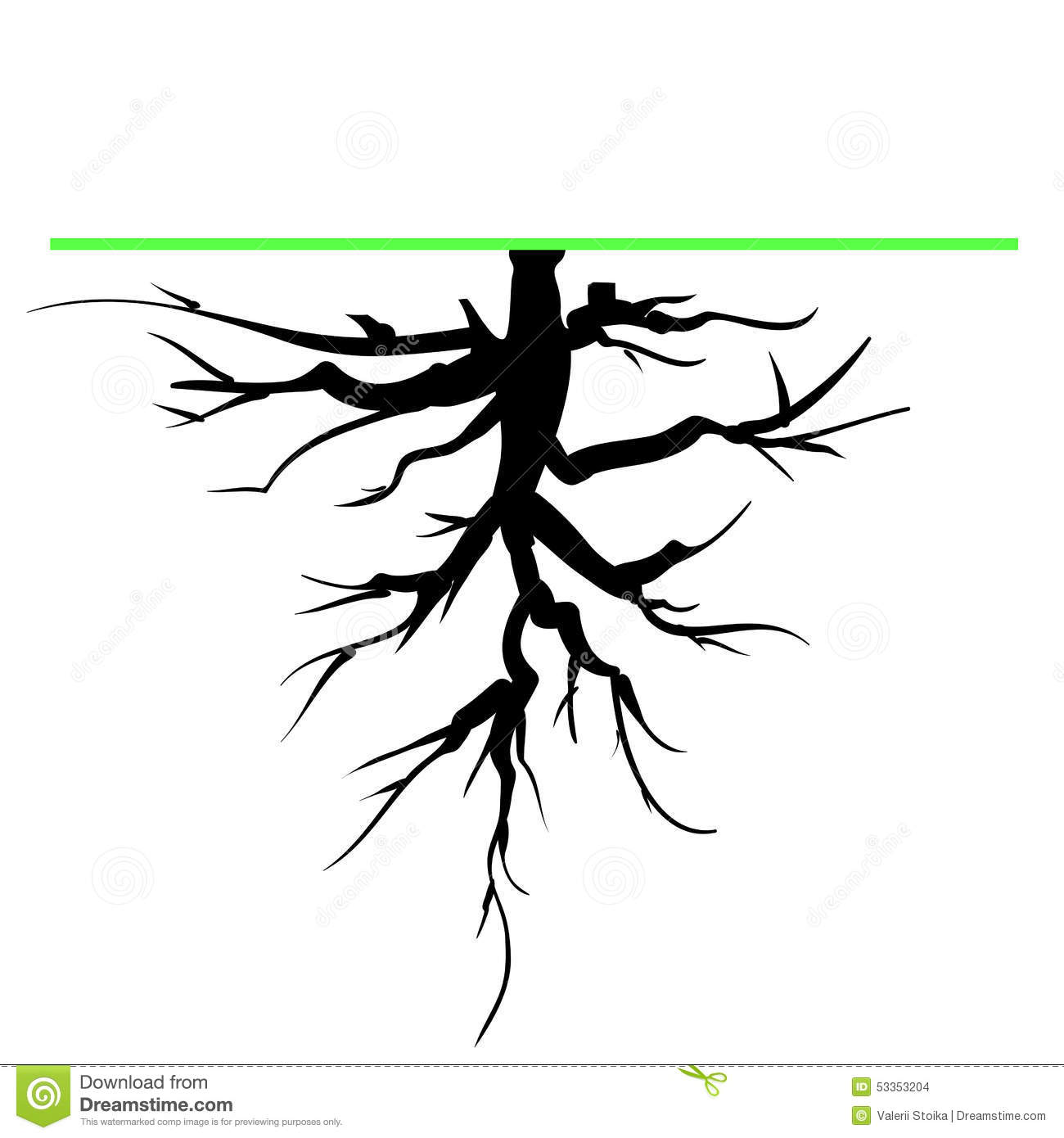 Old Tree Root Silhouette Isolated on White Background.