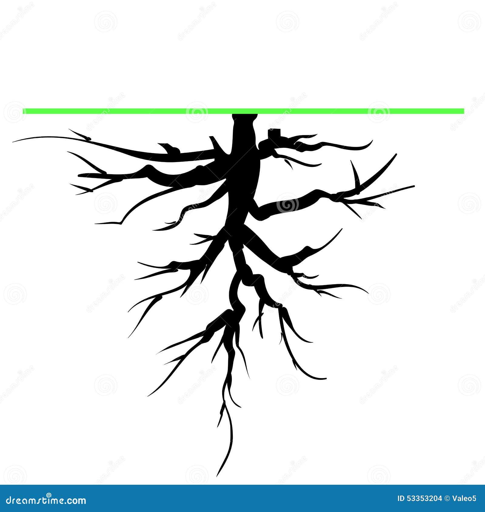 tree root stock vector  illustration of illustration