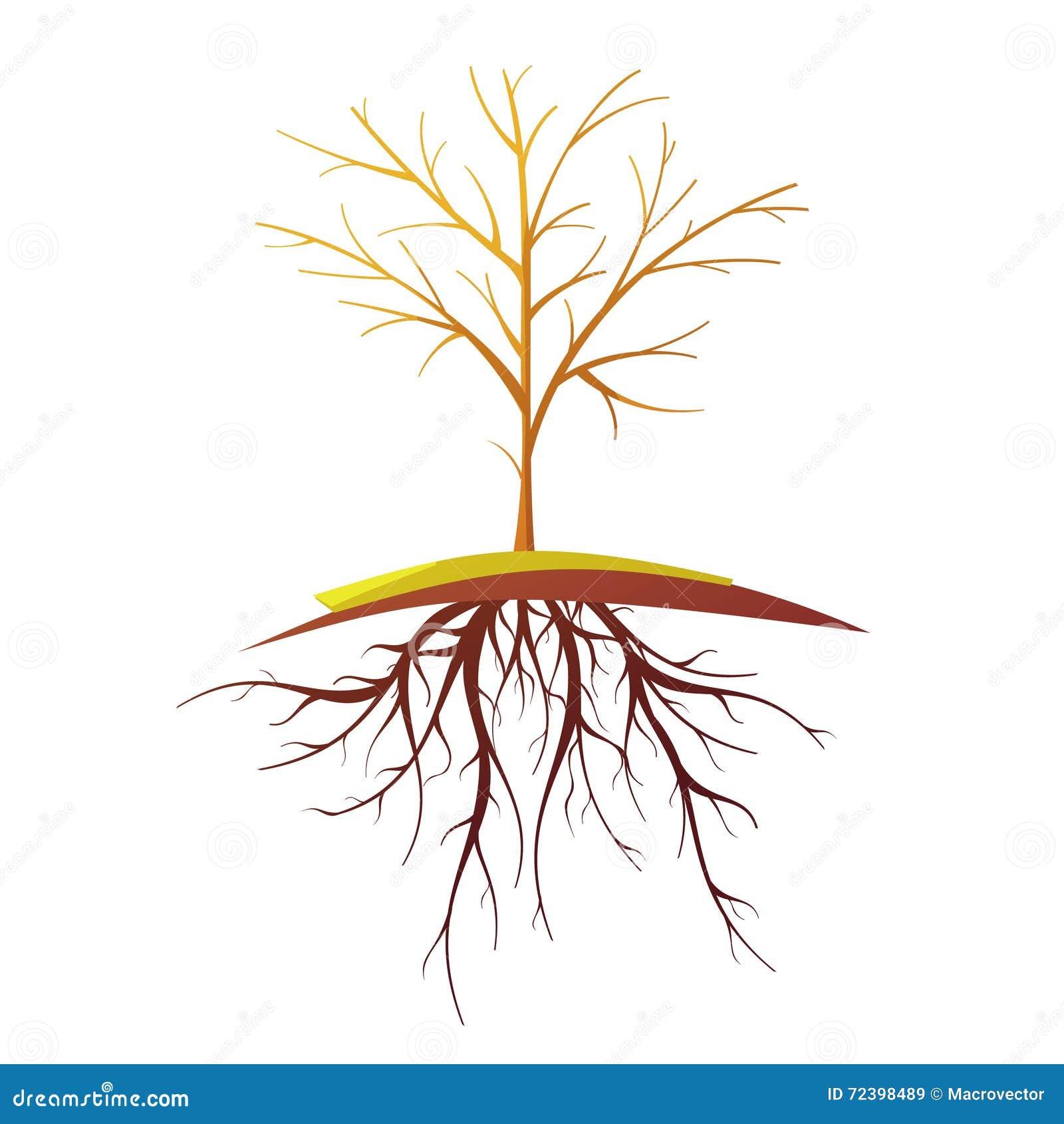 Tree With Root Retro Cartoon Illustration Stock Vector
