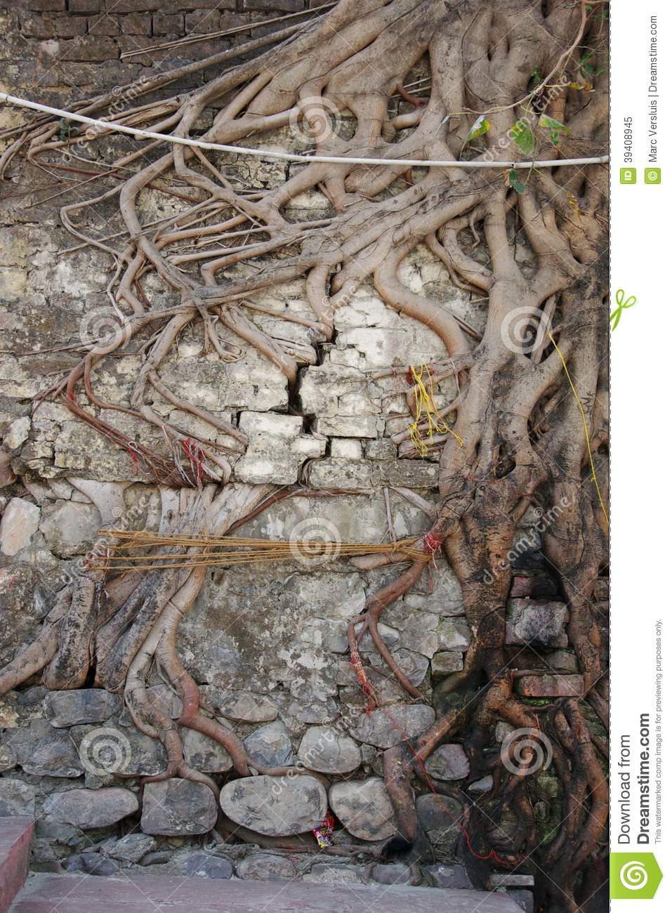 Tree Roots Growing Through Brick Wall Stock Image Image