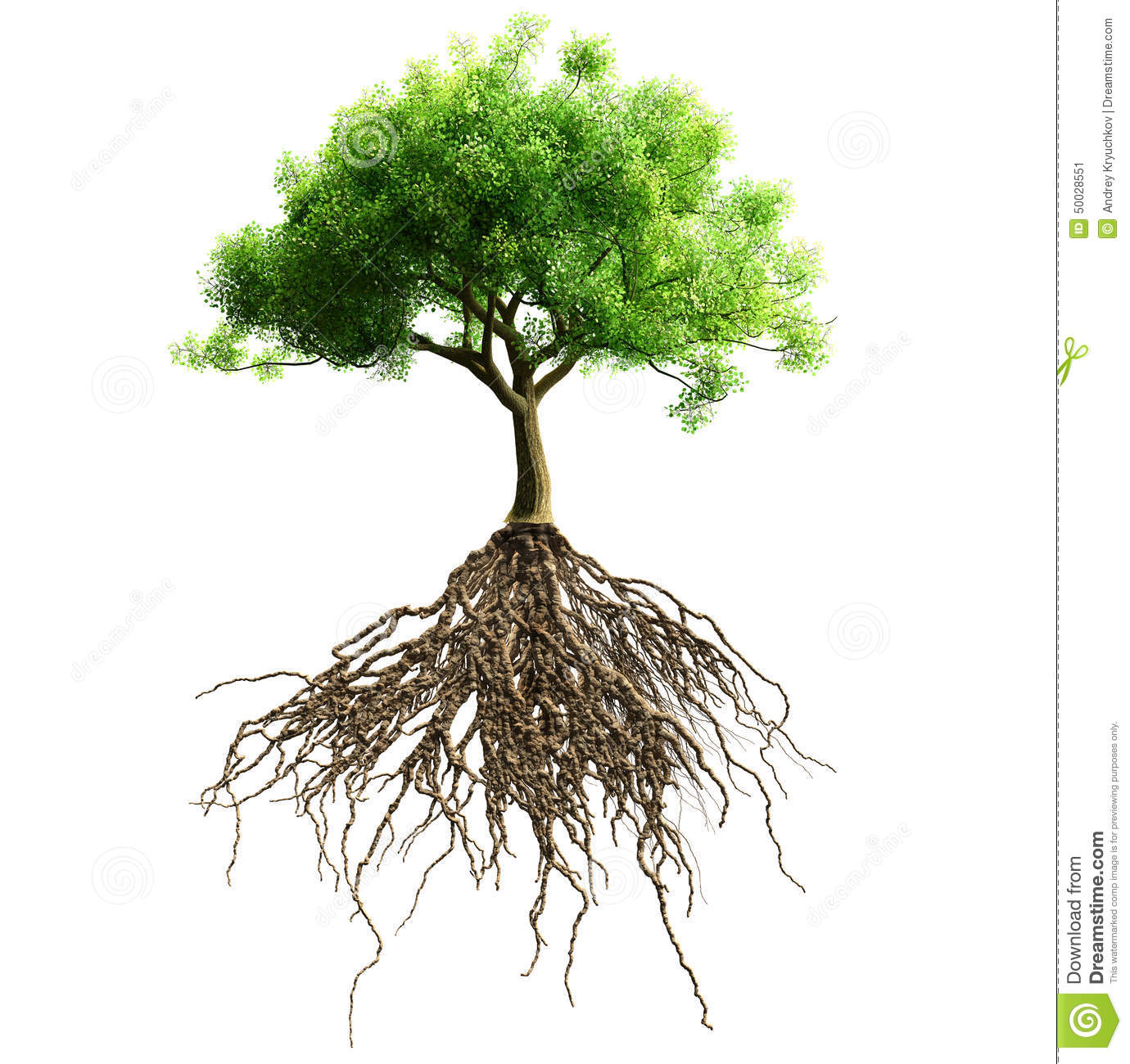 Tree With Roots Stock Photo - Image: 50028551